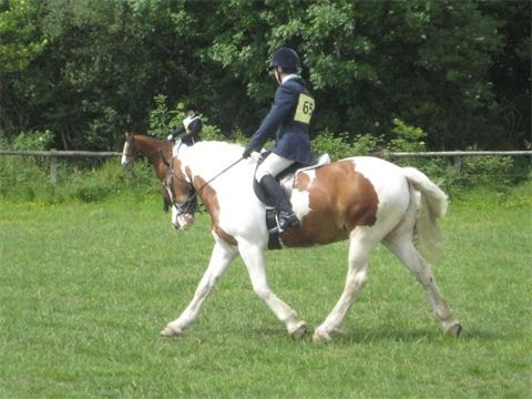 ODE Great WestWood Indie doing her best at Dressage 2012